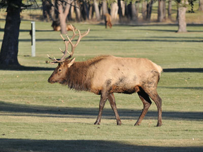 Rufous-crowned Sparrow & Lesser Goldfinch