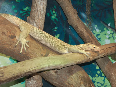 Quince Monitor