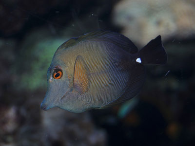 Unidentified Fish